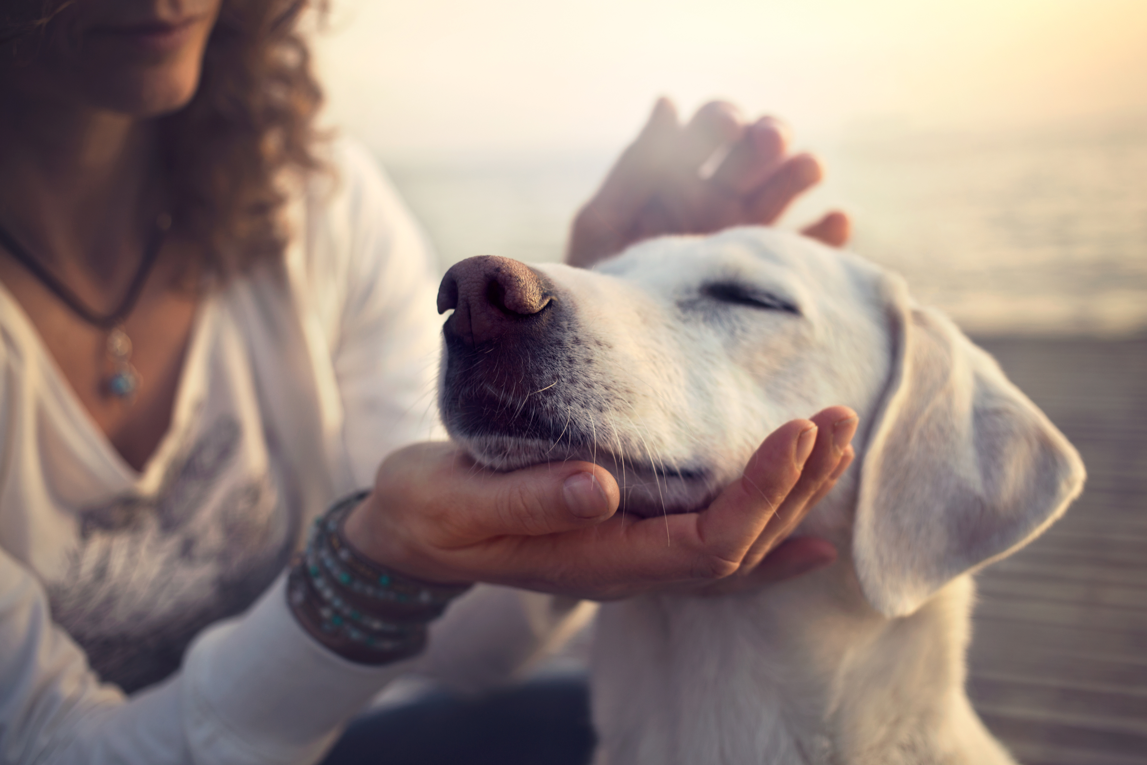 Best of Breed: Being Truthful with Your Insurance Agent About Dogs in the Home on avanteinsurance.com