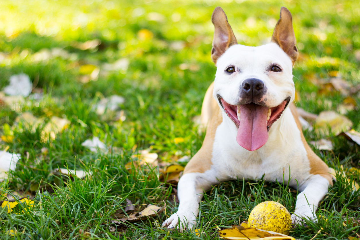 So You Have a New Dog – Do You Need Extra Liability insurance? on avanteinsurance.com
