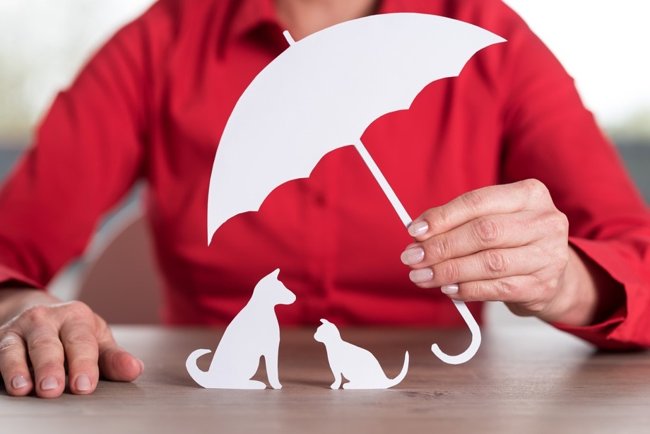 How Pet Insurance Protects Your Furry Family Members on avanteinsurance.com