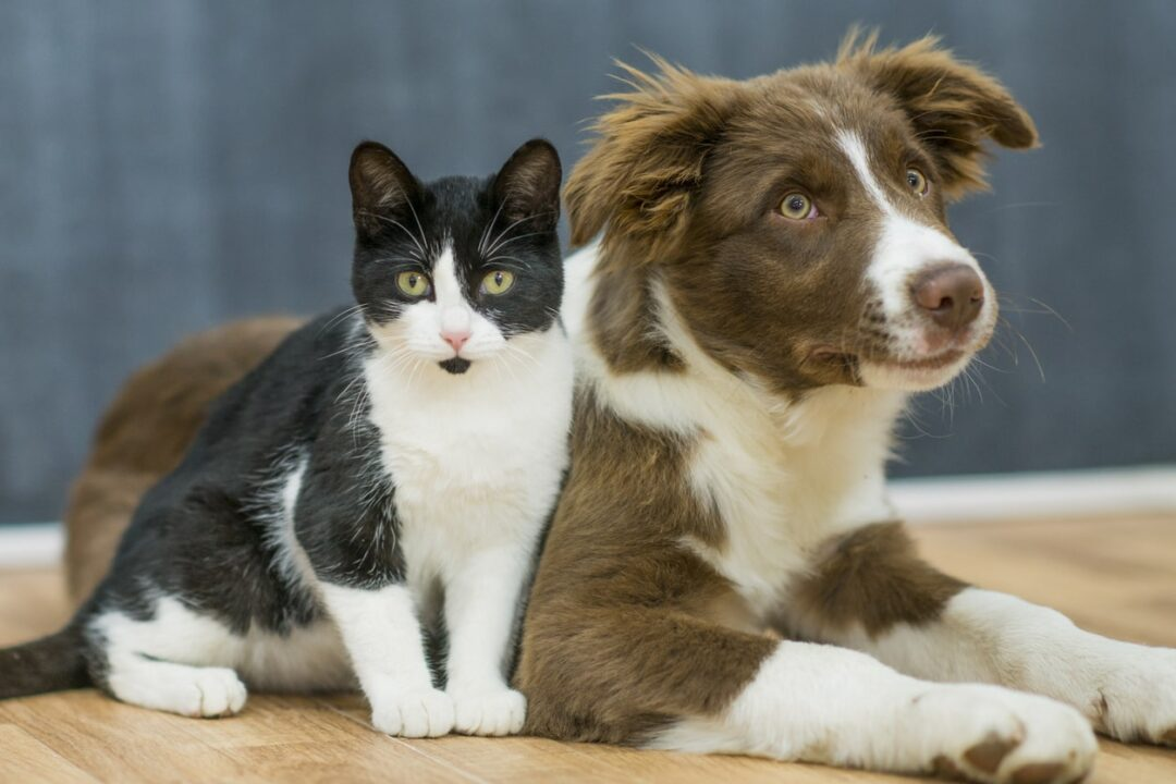 Do Fido and Fluffy Need avanteinsurance.comPet Insurance