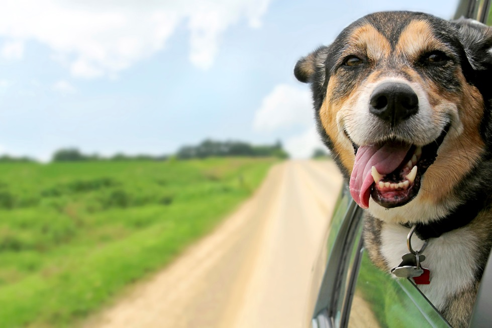 Holiday Road Trip? Make it Smooth, Easy, and Safe