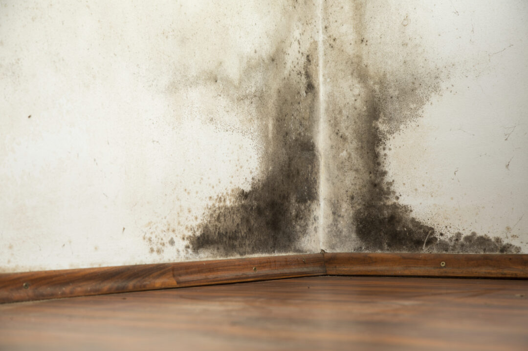 Homeowner's Insurance and Mold: What's Covered and What's Not?